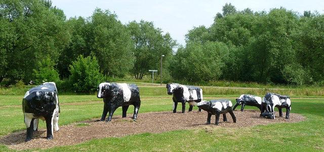 le mucche nei pressi dell'impianto del milton keynes