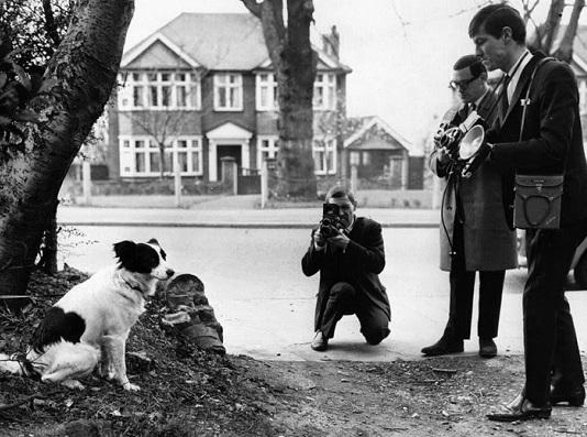 Inghilterra 1966: il cane eroe che salvò la Coppa del Mondo